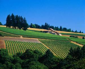 Domaine Drouhin Oregon ©Mick Rock/Cephas