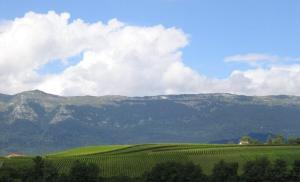 Vineyards near Geneva with the Jura mountains