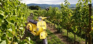 Yellow Vespa waiting for wine tourists