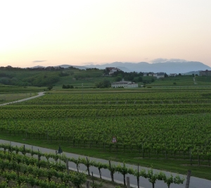 Vineyards in Zegla in the heart of Collio