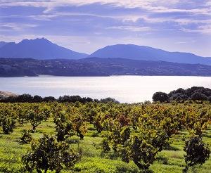Vineyards in Corsica