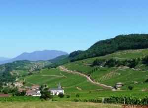 Savoie vineyards