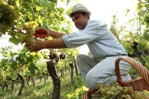 Mitja Lavrencic Slovenia winegrower