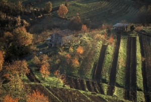 Simcic Vineyards in Slovenia