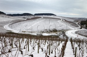 Chablis in the snow