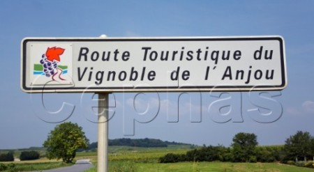 Anjou wine route