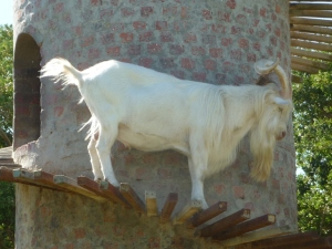 Fairview Goat Tower South Africa