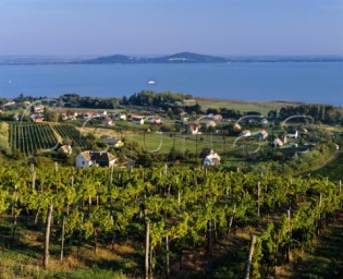 Lake Balaton vineyards