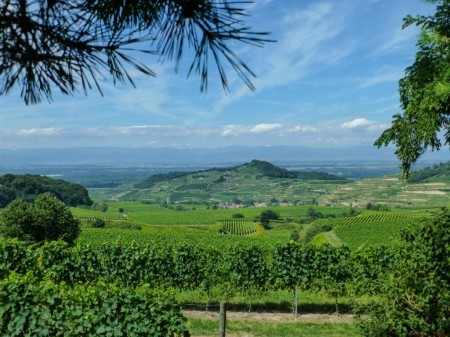 Kaiserstuhl vineyards