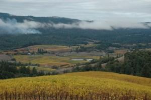Mendocino vineyards in Anderson Valley