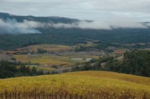 Mendocino vineyards in Anderson Valley