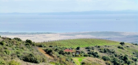 Gali vineyard