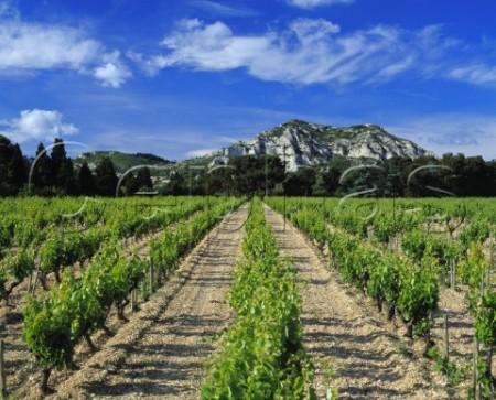 Mas de la Dame Provence