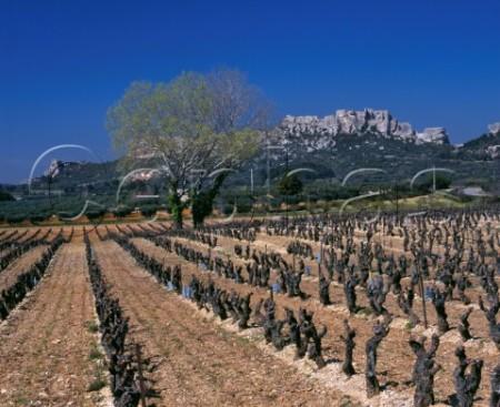 Les Baux vineyard